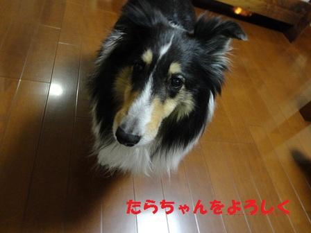 f0046854_22135211.jpg