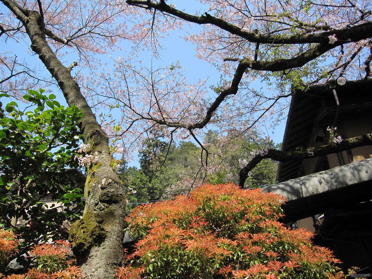 2013年4月13日桜実況中継_c0078659_17552613.jpg
