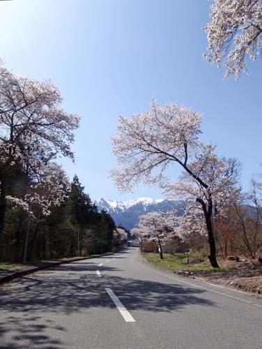 春の雪_a0224382_1311225.jpg