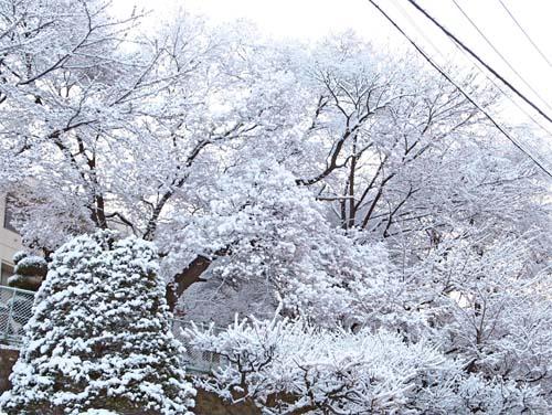 春の雪_a0224382_1312071.jpg
