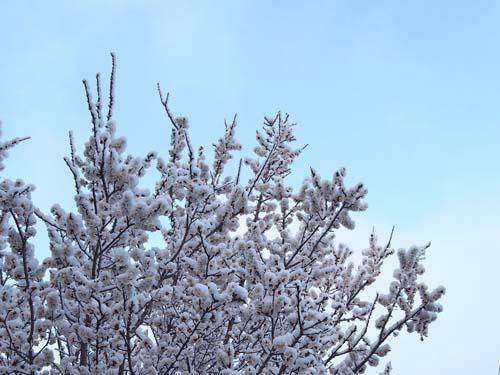 春の雪_a0224382_1312184.jpg