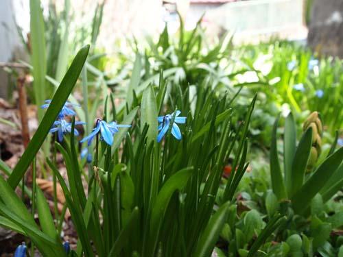 春の雪_a0224382_13401494.jpg