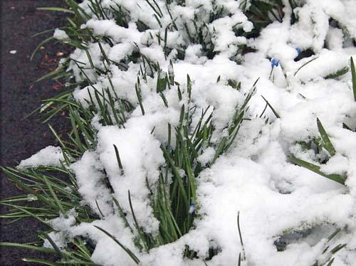 春の雪_a0224382_13401894.jpg
