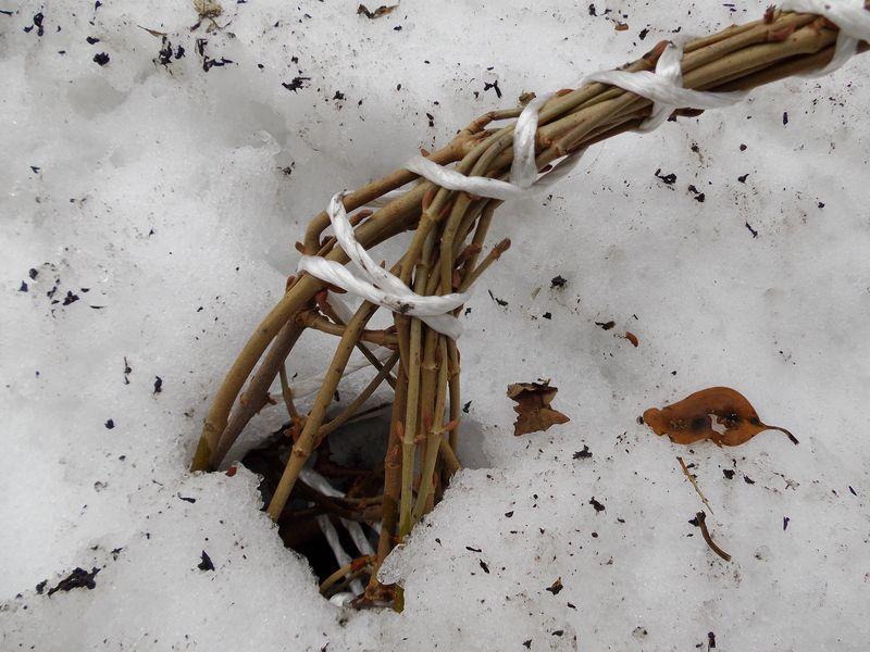 雪開け初日_c0025115_22492569.jpg