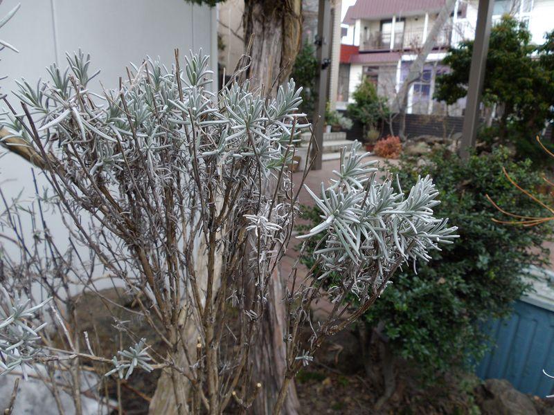 雪開け初日_c0025115_2249939.jpg