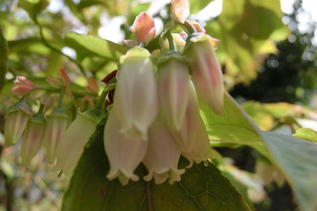 お花と蜂の季節♪_c0229423_2147610.jpg