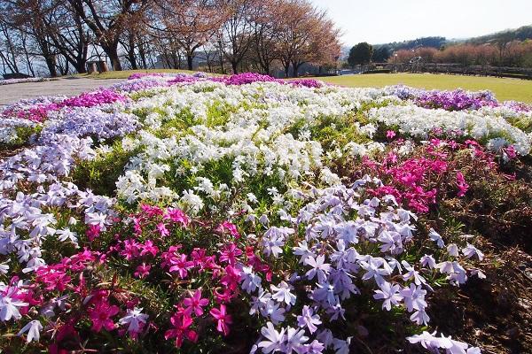 春爛満 丘の上は花ざかり_f0214527_1040933.jpg