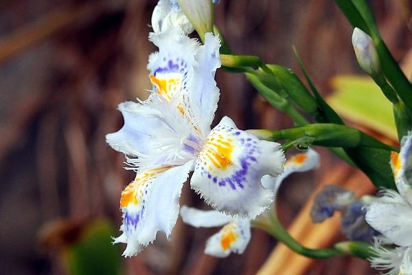 春爛満 丘の上は花ざかり_f0214527_10441724.jpg
