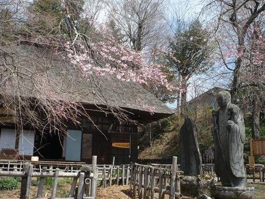 桜の花の咲く頃は♪_d0127634_11541799.jpg