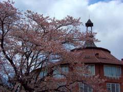桜の花の咲く頃は♪_d0127634_15151030.jpg