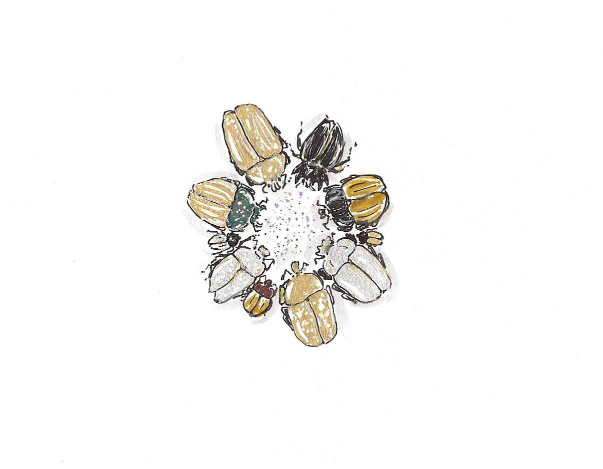 Flying scarab brooch_b0185236_11175686.jpg