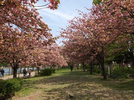 4柴で浮間公園散歩_b0080342_2133584.jpg