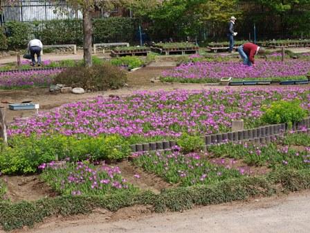 4柴で浮間公園散歩_b0080342_2138128.jpg