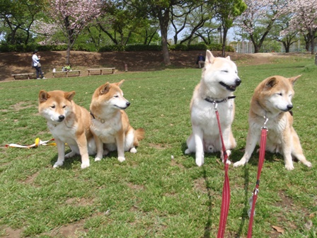 4柴で浮間公園散歩_b0080342_21405368.jpg