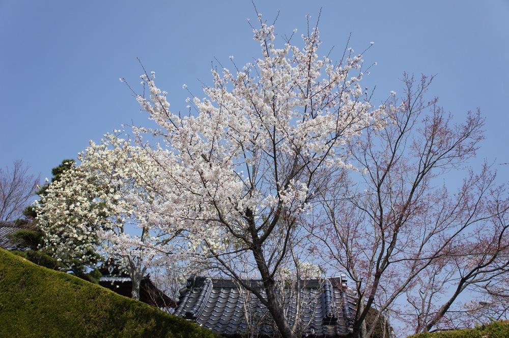 一足先に春爛漫_d0001843_2033223.jpg
