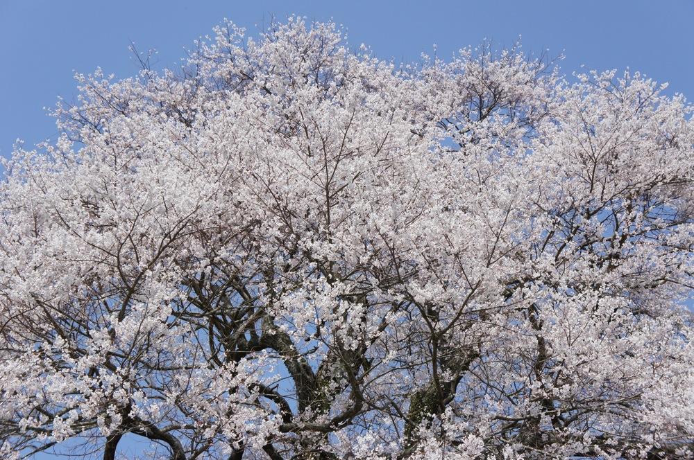 一足先に春爛漫_d0001843_20335846.jpg