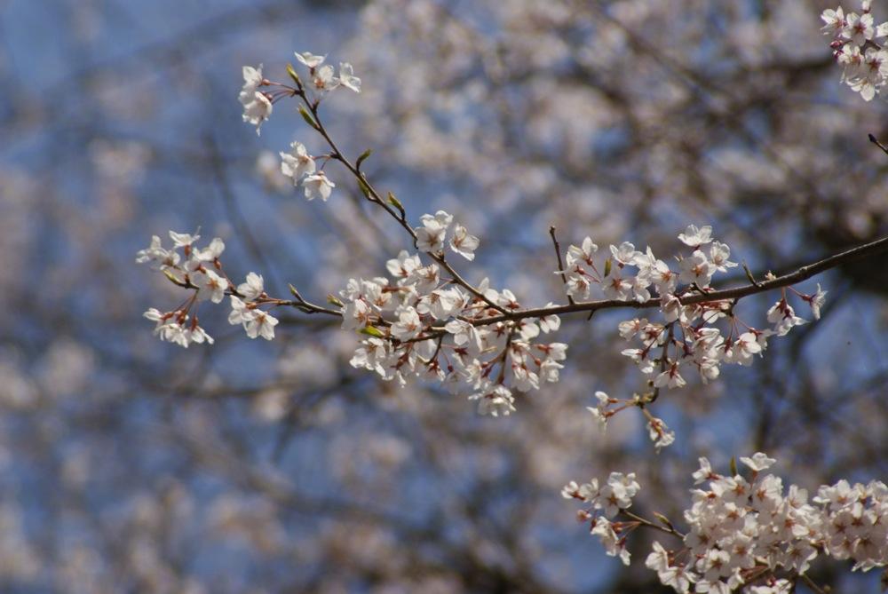 一足先に春爛漫_d0001843_20344123.jpg