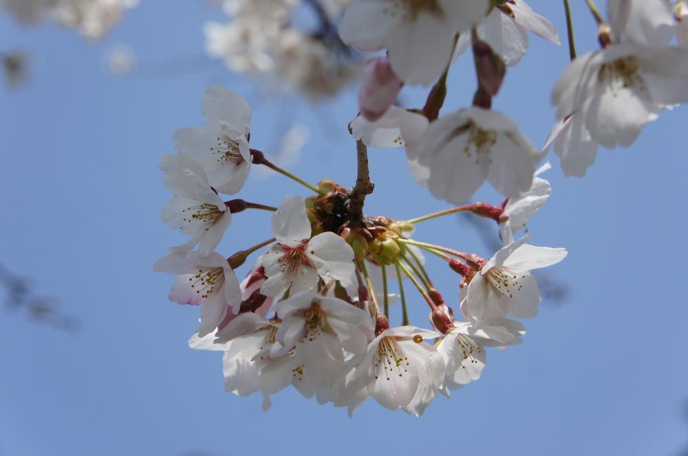 一足先に春爛漫_d0001843_20372343.jpg