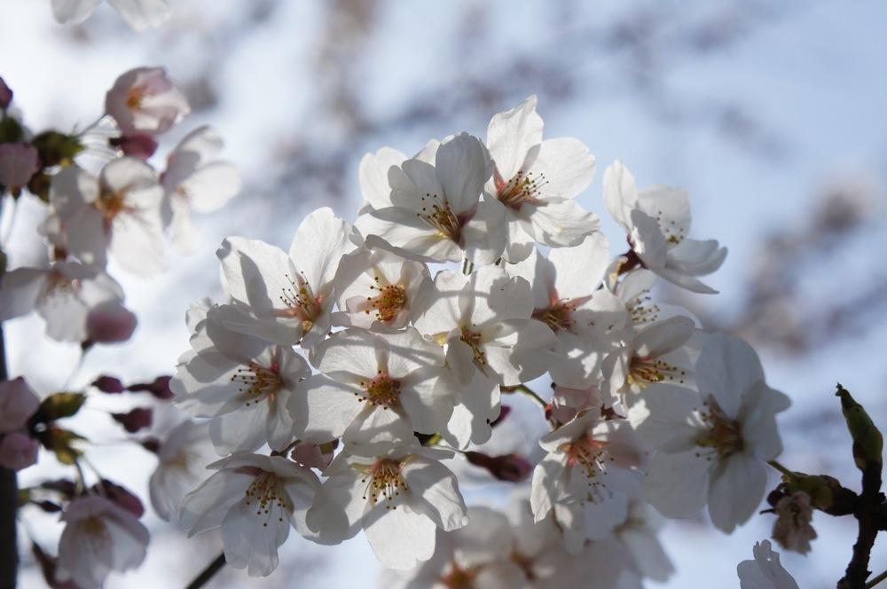 一足先に春爛漫_d0001843_2037298.jpg