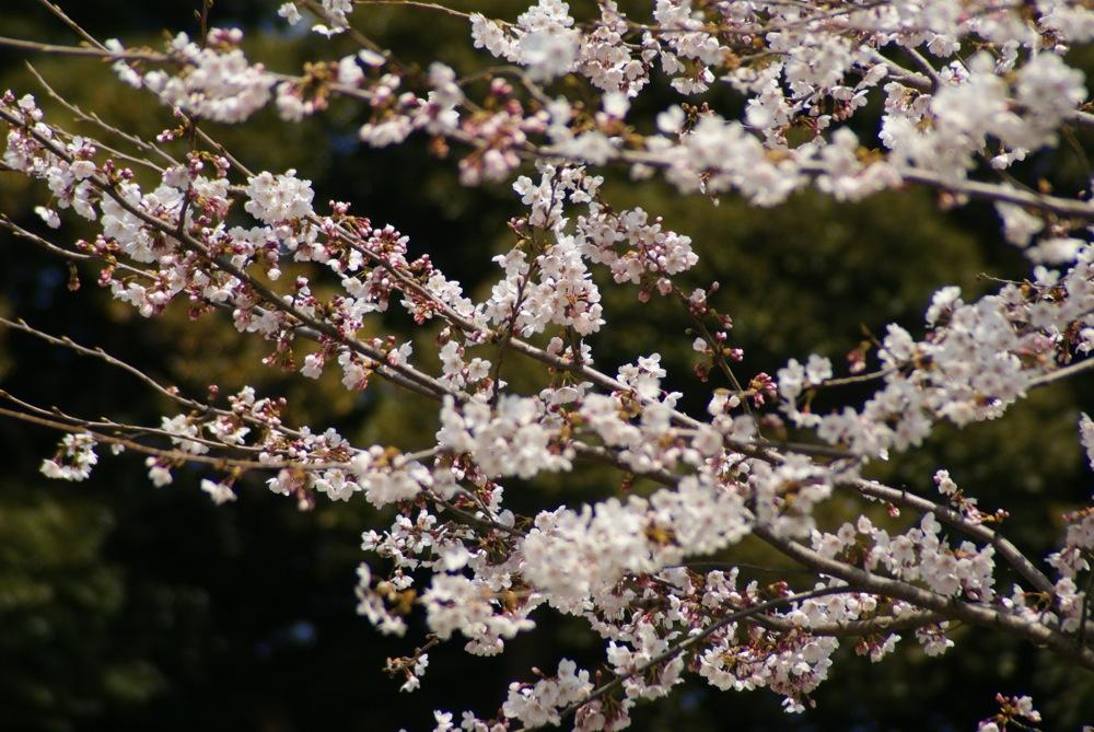 一足先に春爛漫_d0001843_2038138.jpg