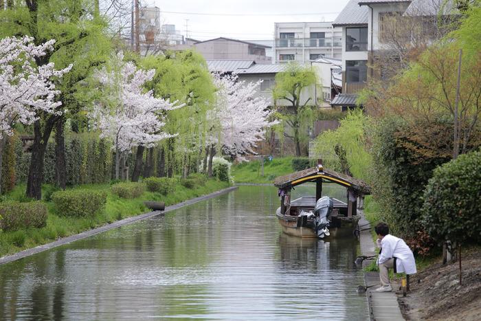 桜 2013 <京都 伏見> _f0021869_3463919.jpg
