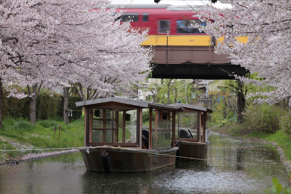 桜 2013 <京都 伏見> _f0021869_3471631.jpg