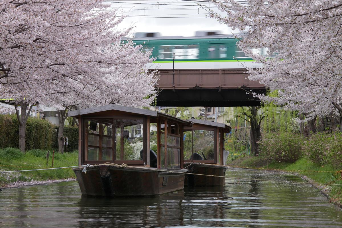 桜 2013 <京都 伏見> _f0021869_3484571.jpg