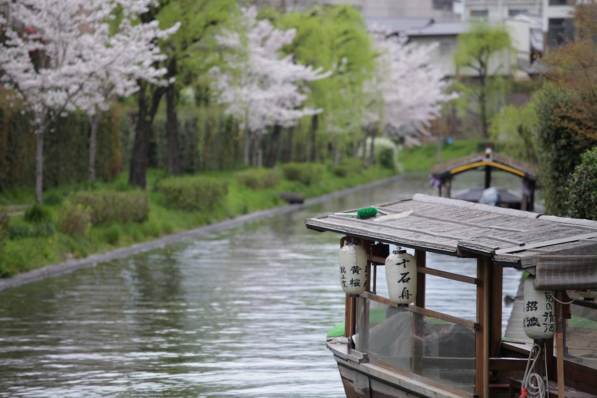 桜 2013 <京都 伏見> _f0021869_3493268.jpg