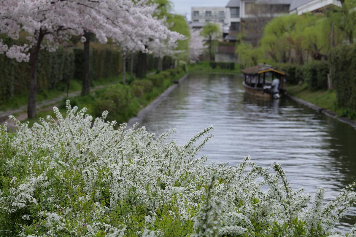 桜 2013 <京都 伏見> _f0021869_349468.jpg