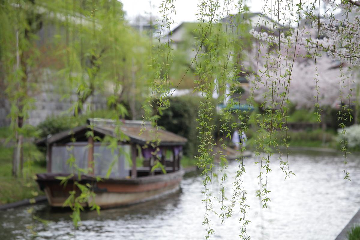 桜 2013 <京都 伏見> _f0021869_3504776.jpg