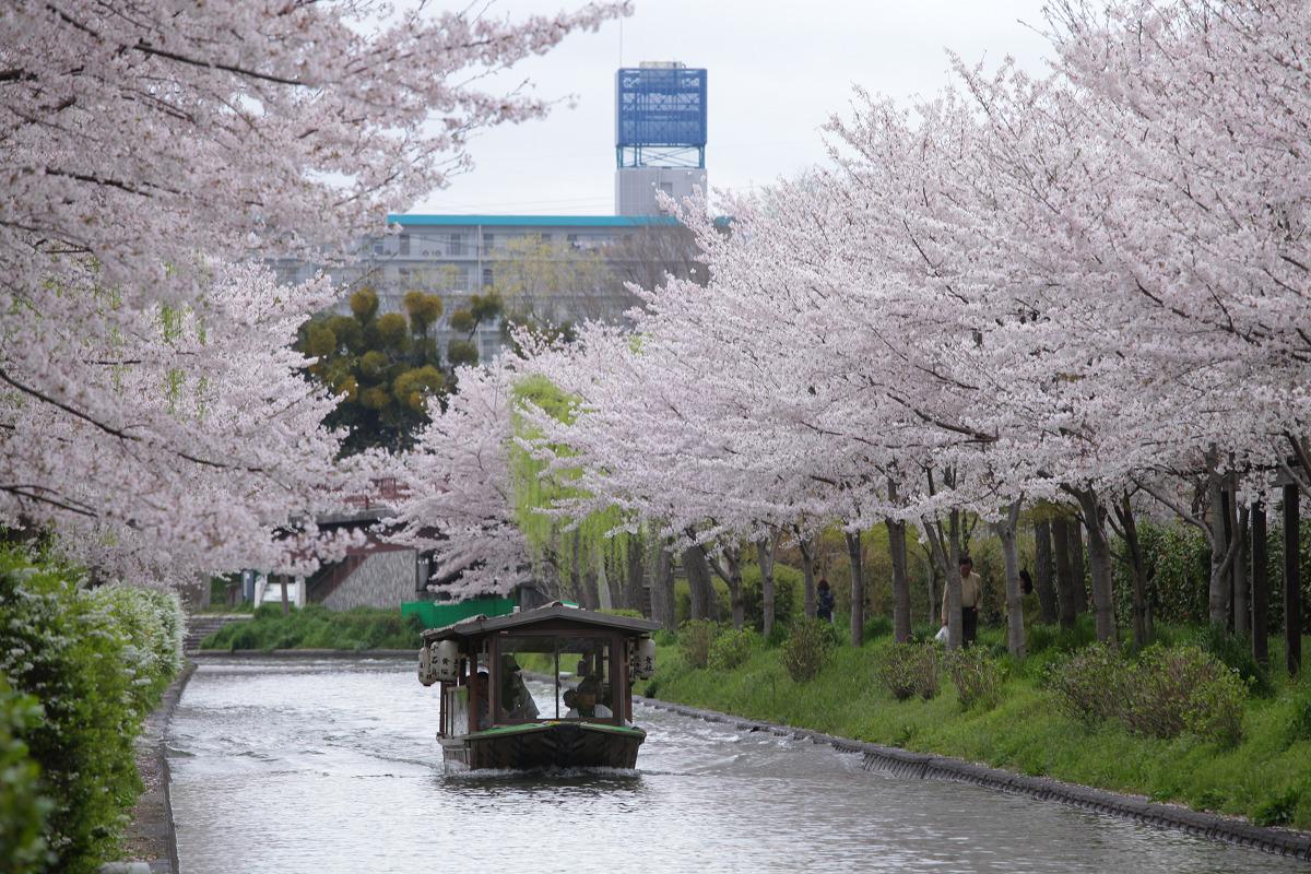 桜 2013 <京都 伏見> _f0021869_3513292.jpg