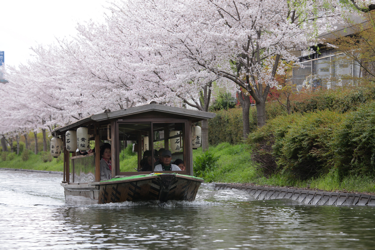 桜 2013 <京都 伏見> _f0021869_3515879.jpg