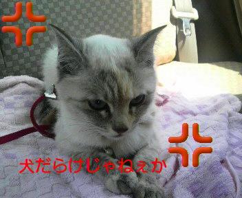 b0059770_064881.jpg