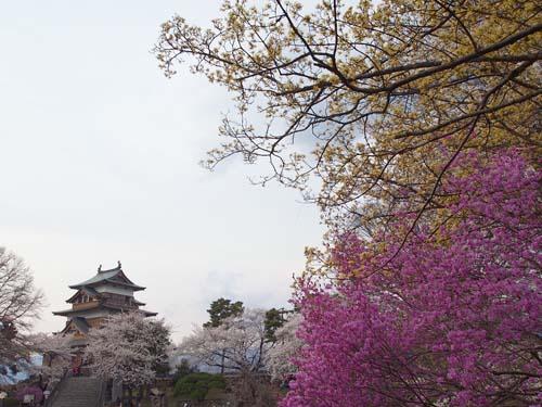 諏訪の桜_a0224382_23431534.jpg