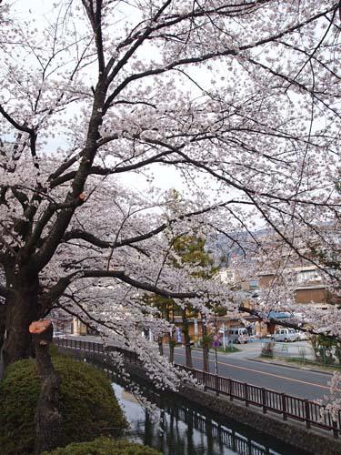 諏訪の桜_a0224382_2343943.jpg