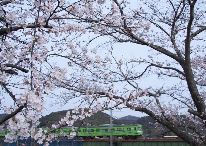 宇治川を渡るJR_f0266284_227461.jpg
