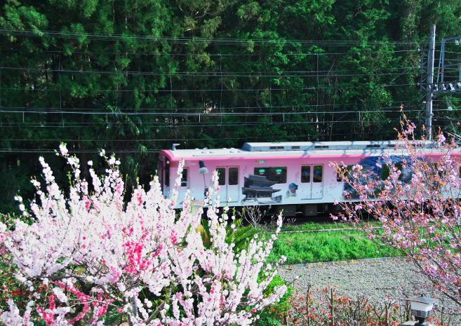 近鉄吉野線ラッピング電車_f0266284_263313.jpg