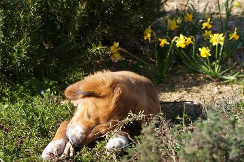 トスカーナの春_f0106597_446860.jpg