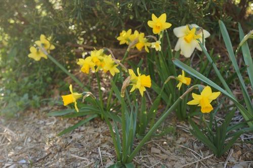 トスカーナの春_f0106597_534176.jpg