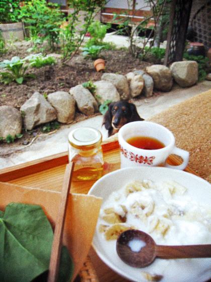 新緑の中庭で朝ごぱん、昼ごはん。_d0077603_9514939.jpg