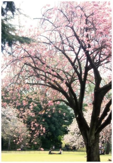 桜の樹の下で_d0151003_23311241.jpg