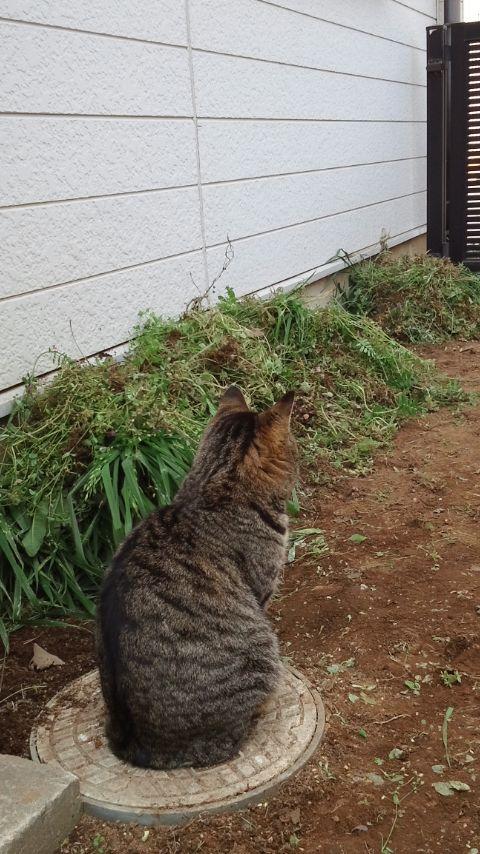 猫の手_f0155808_10217100.jpg
