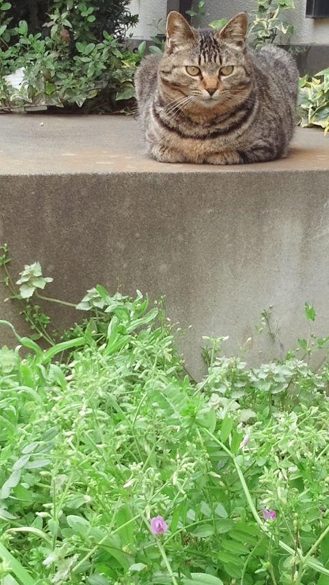 猫の手_f0155808_1021736.jpg