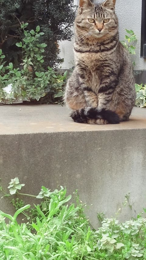 猫の手_f0155808_1021790.jpg