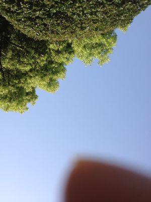 今日は緑を感じようとしまして_d0242009_22242740.jpg