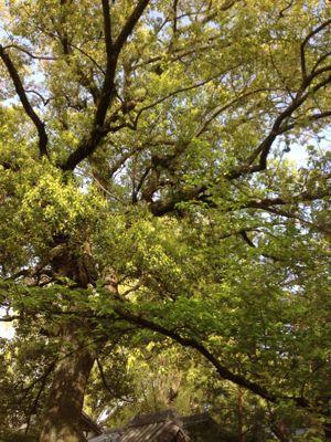 今日は緑を感じようとしまして_d0242009_22242877.jpg