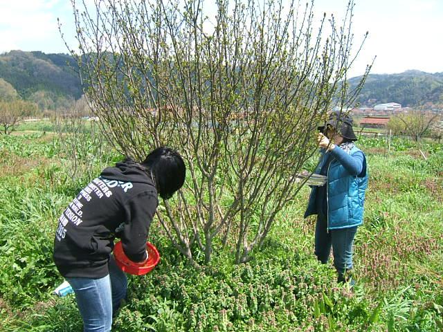 花山椒の収穫始まる_c0220321_18332392.jpg