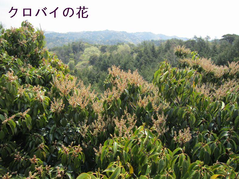 みさき里山クラブ・総会&懇親会    by  (ナベサダ)_c0239329_1411121.jpg