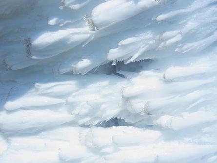 お山の観察会#3 下山編_b0207642_10362881.jpg