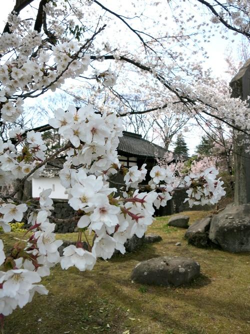 小諸の桜❤懐古園周辺散策_f0236260_18105383.jpg